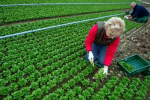 Agricoltura - Politica Agricola Comune Imc