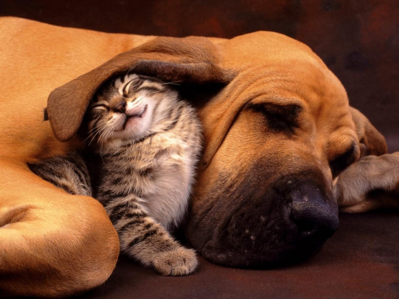 Animali domestici - Cani e gatti Imc