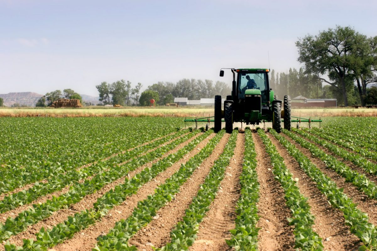 Agricoltura Imc