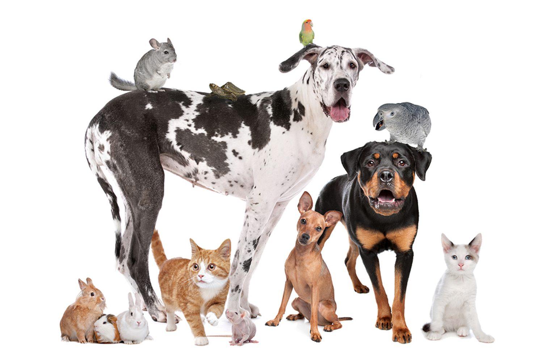 Animali domestici Imc
