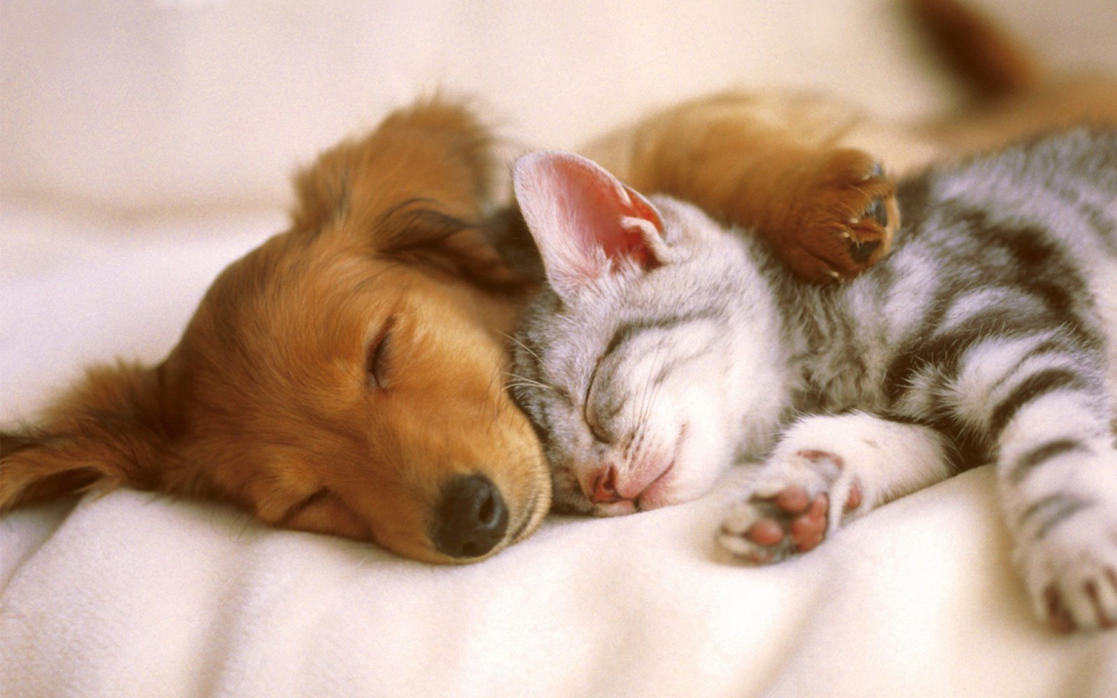 Animali domestici - Cani e gatti (2) Imc