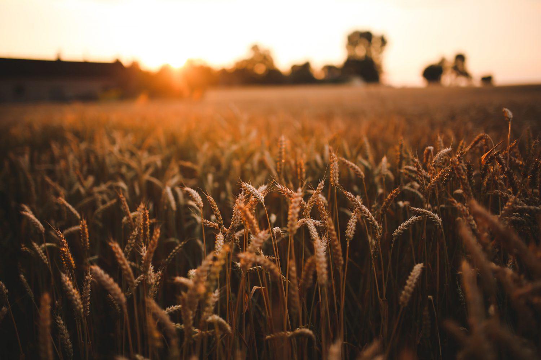 Agricoltura (3) Imc