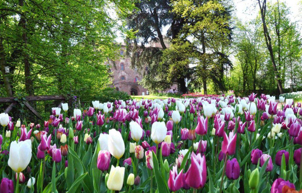 Castello di Pralormo - Messer Tulipano Imc