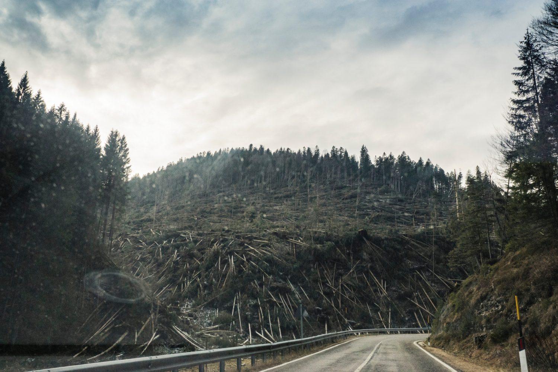Catastrofi naturali - Deforestazione (Foto Francesco Paggiaro - Pexels) Imc